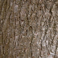 Nature Tree Trunk 178