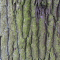 Nature Tree Trunk 180