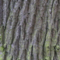 Nature Tree Trunk 182
