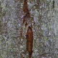 Nature Tree Trunk 183