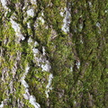 Nature Tree Trunk 187