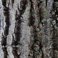 Nature Tree Trunk 189