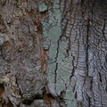 Nature Tree Trunk 190
