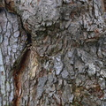 Nature Tree Trunk 191