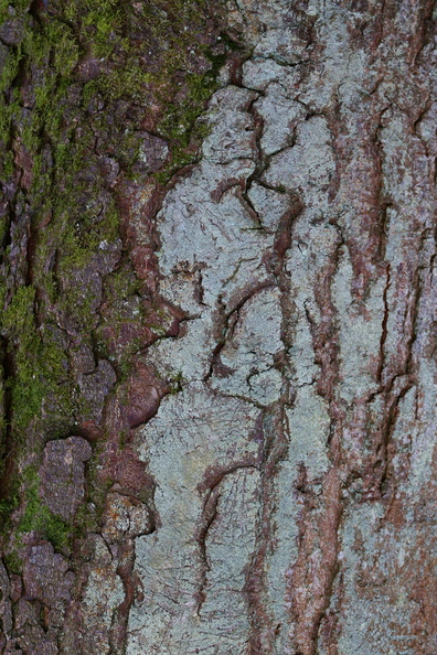 Nature_Tree_Trunk_194.JPG