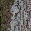 Nature Tree Trunk 194
