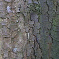 Nature Tree Trunk 196