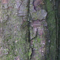 Nature Tree Trunk 197