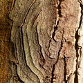 Nature Tree Trunk 199