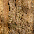 Nature Tree Trunk 200