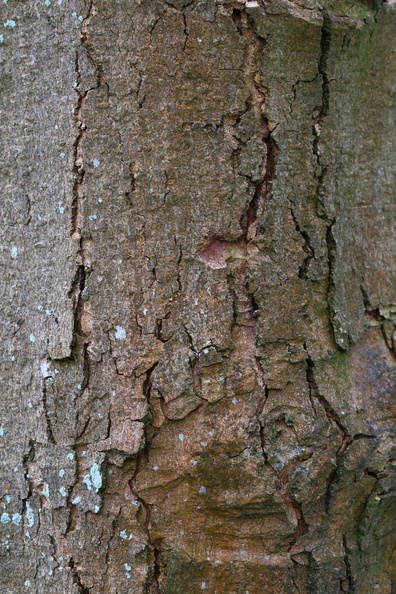 Nature_Tree_Trunk_202.JPG