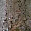 Nature Tree Trunk 202