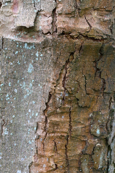 Nature_Tree_Trunk_203.JPG