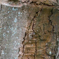 Nature Tree Trunk 203