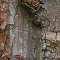 Nature Tree Trunk 204