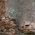 Nature Tree Trunk 205