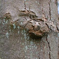 Nature Tree Trunk 206