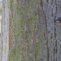 Nature Tree Trunk 214
