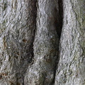 Nature Tree Trunk 219