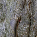 Nature Tree Trunk 221