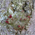 Nature Tree Trunk 223