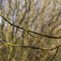 Nature Branches 009
