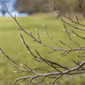 Nature Branches 015