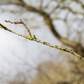 Nature Branches 018
