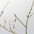 Nature Branches 020