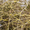 Nature Branches 021