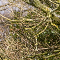 Nature Branches 023