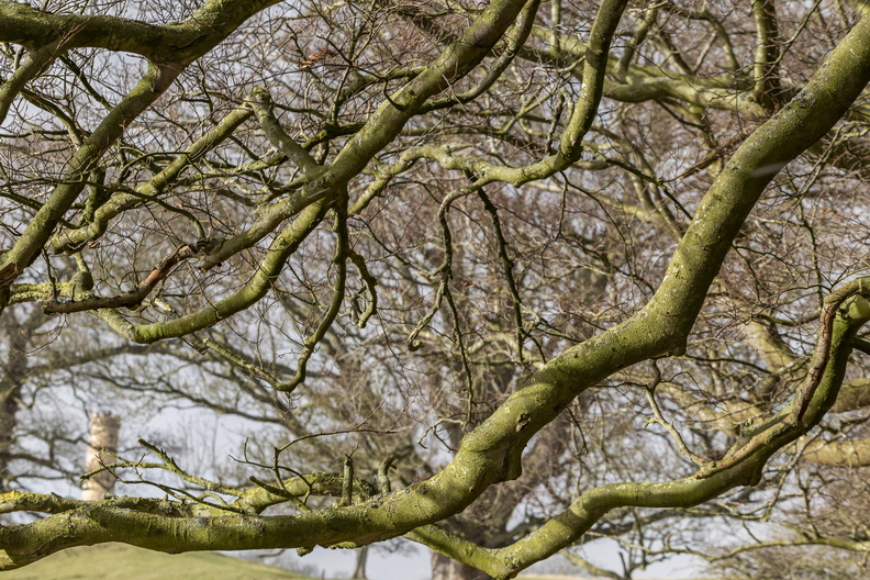 Nature_Branches_029.JPG