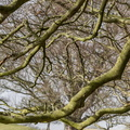 Nature Branches 029