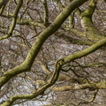 Nature Branches 030