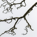 Nature Branches 032
