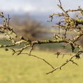 Nature Branches 040