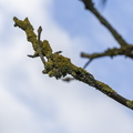 Nature Branches 044