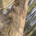 Wood Rotten 010