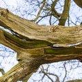 Wood Rotten 013