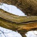 Wood Rotten 015