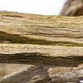 Wood Rotten 016