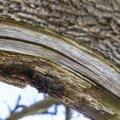 Wood Rotten 020