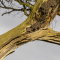 Wood Rotten 022