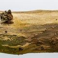 Wood Rotten 023