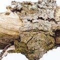 Wood Rotten 025