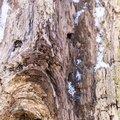 Wood Rotten 028