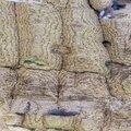 Wood Rotten 030