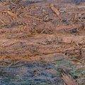 Wood Rotten 007