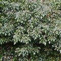 Nature Bushes 019