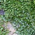 Nature Bushes 020